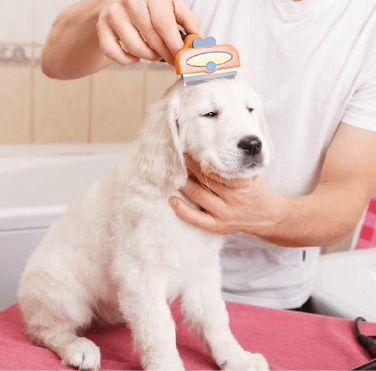 Dog Groomers in Southampton
