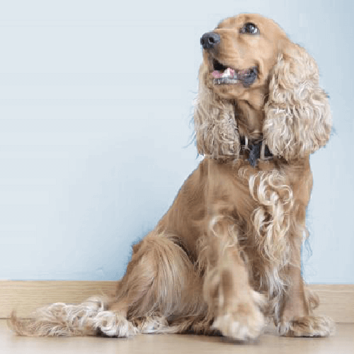 Shiny & Healthy Dog Grooming